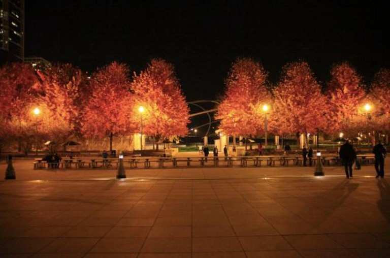 Chicago red trees | © BuzzFarmers/Flickr