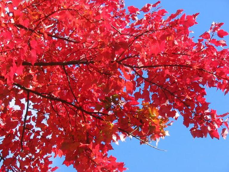 Red Leaves | © Luke Jones/Flickr