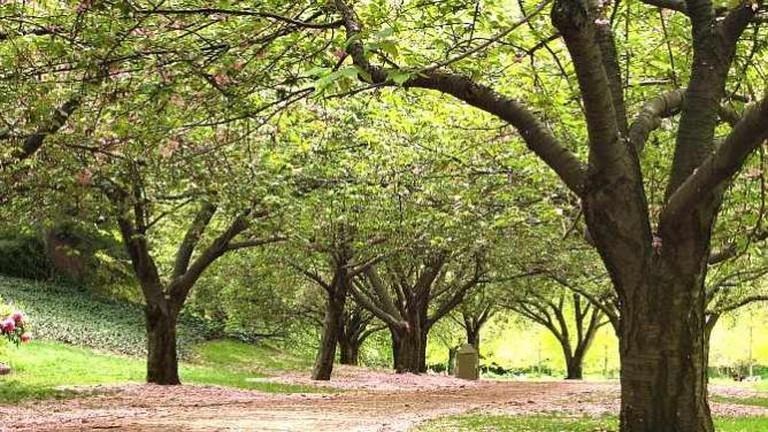Blossom Trail | © Jp/Flickr