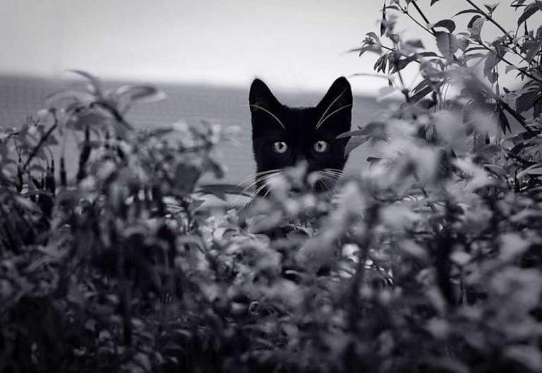 Black cat © AlmaArte Photography/Flickr