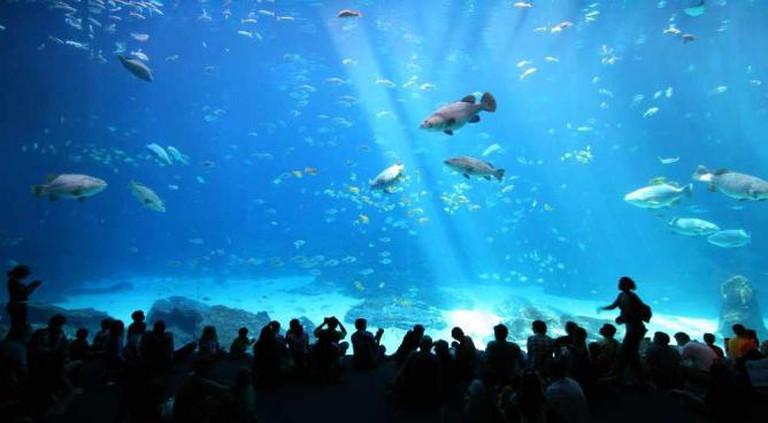Georgia Aquarium | © Girish/Flickr