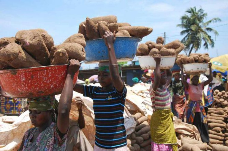 Yam harvest in Ghana | Ⓒ IITA/Flickr