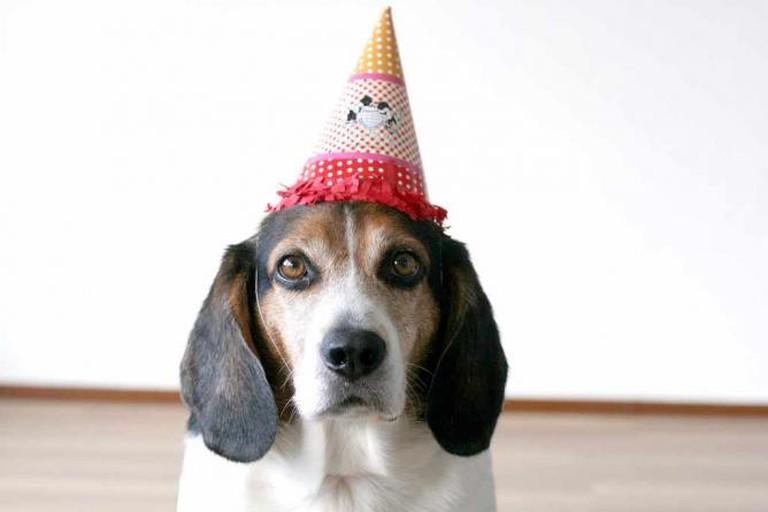 Party Hat | © sarah b/Flickr