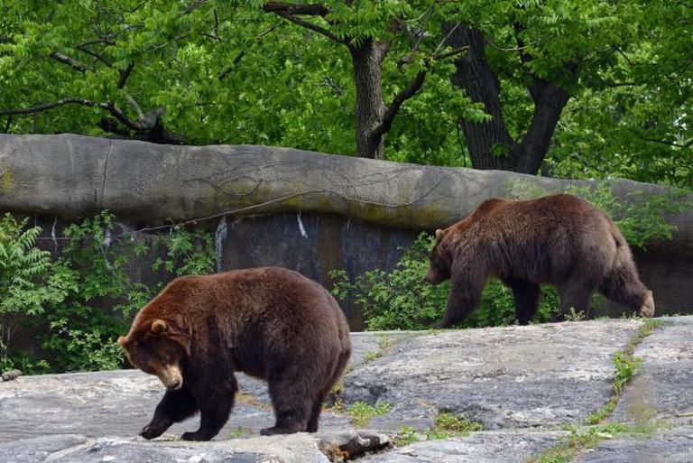 Bronx Zoo_2015 05 24_0132 | © Harvey Barrison/Flickr