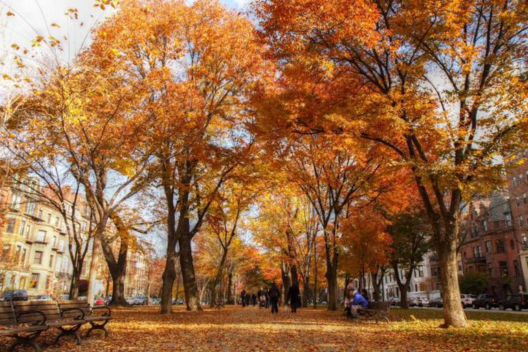 Commonwealth Avenue Mall © clry2/flickr