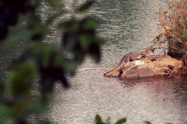 Muta Crocodile Park   © Skmishraindia/WikiCommons