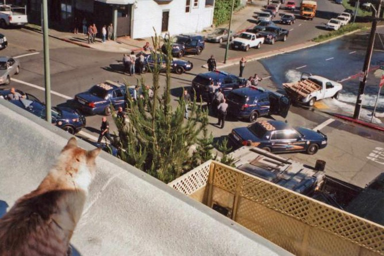 """ACAB(All Cats Are Beautiful)"" 35mm. 2015. 