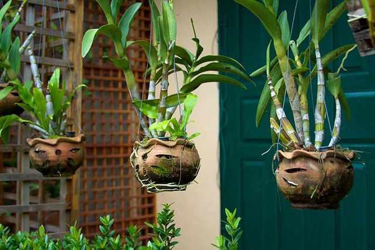 Hanging plants   © russavia/WikiCommons