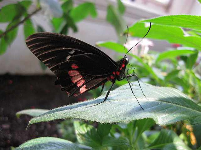 Japanese butterfly | © Amy/Flickr