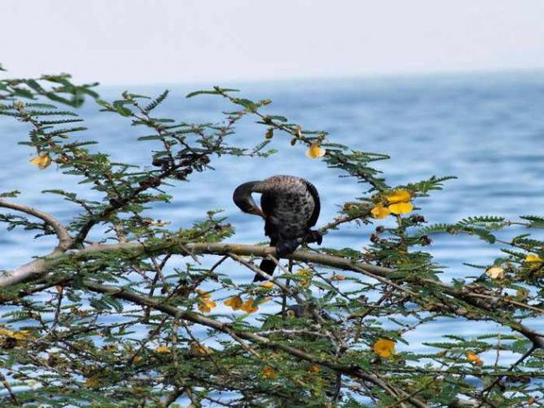 Chimp Island | © Christine Olson/Flickr