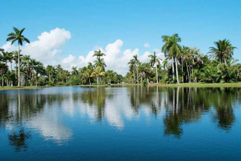 Fairchild Vista   Courtesy of Fairchild Tropical Botanic Garden