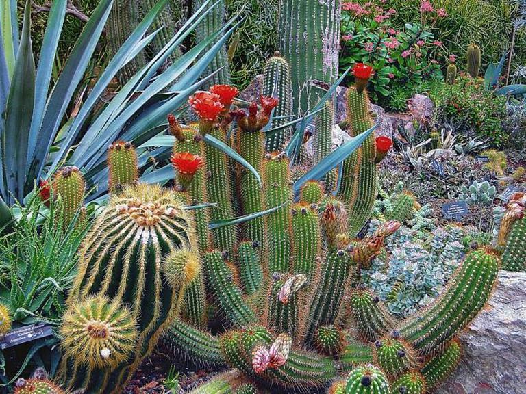 Botanical Garden   © Uroburos/Pixabay