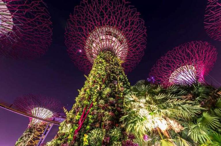 Supertrees, Singapore | © Kai Lehmann