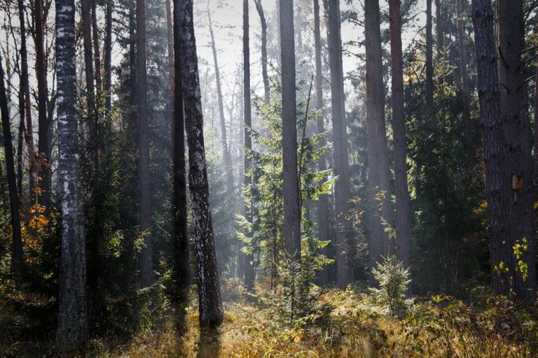 Białowieża Forest | © Marc Veraart/Flickr