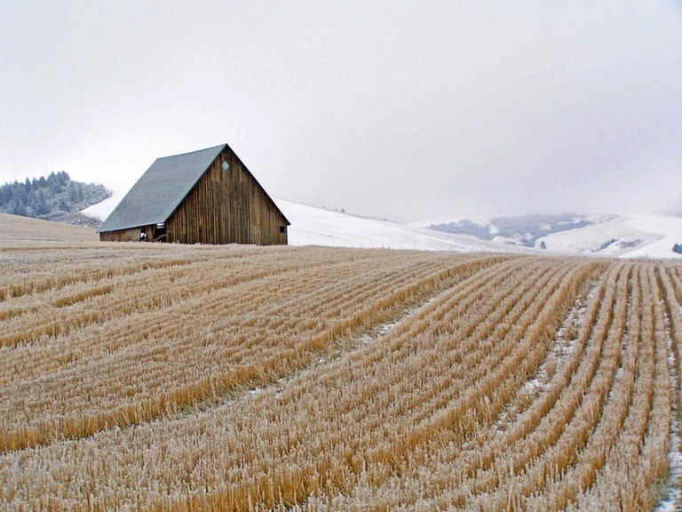 Mill Creek Road Barn and Frosted Wheat Stubble Near Walla Walla © Jim Willis/Flickr