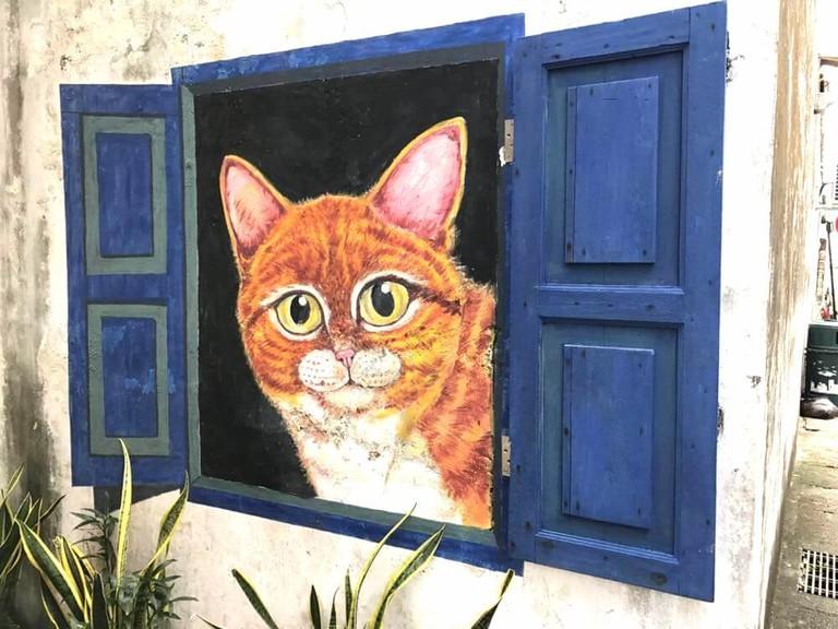 The Window Cat | © Hussain Ajina