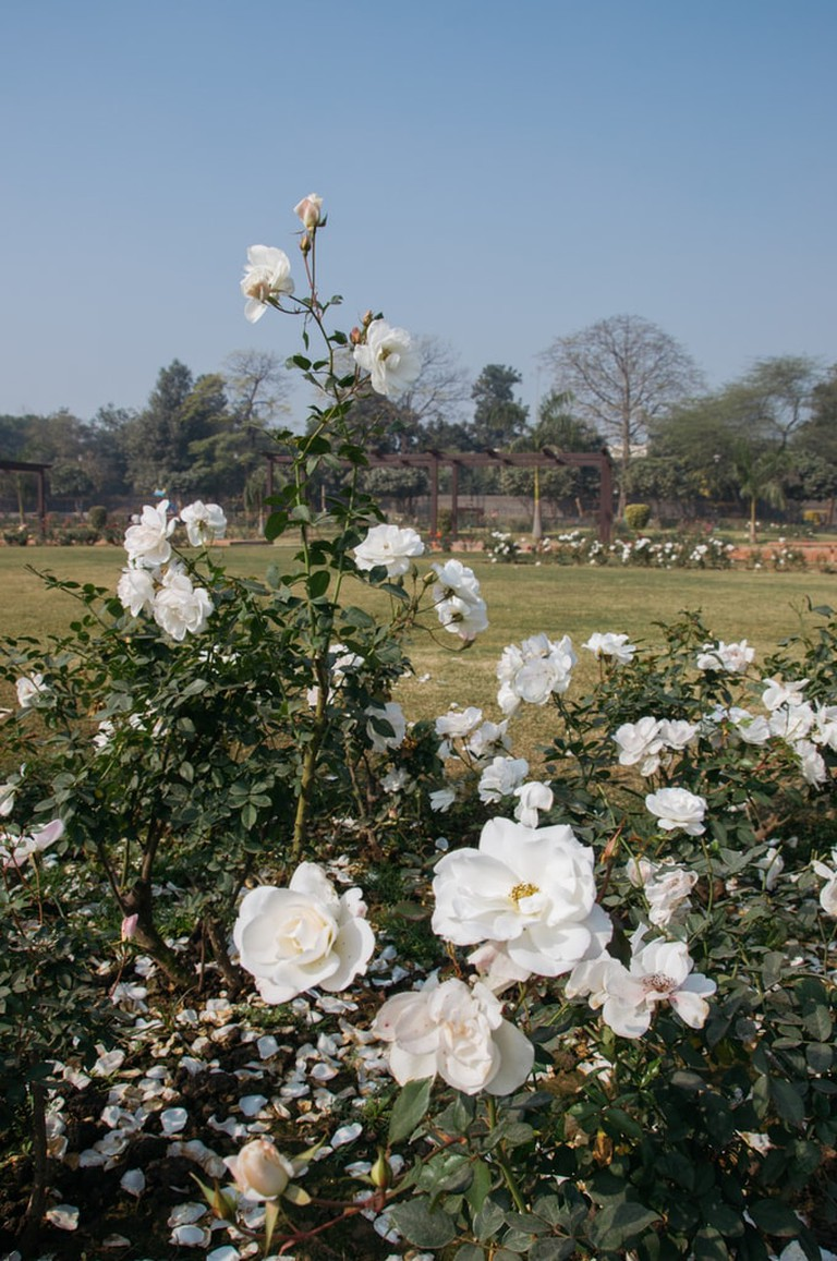 SCTP0092-MITTAL-INDIA-DELHI- NATIONAL​ ​ROSE​ ​GARDEN -23