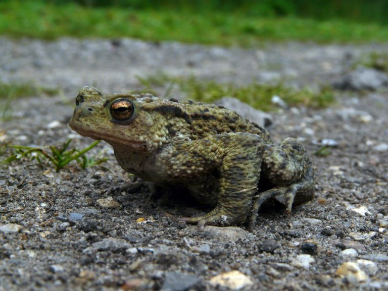 Toad on the Road | © Alastair Rae/Flickr