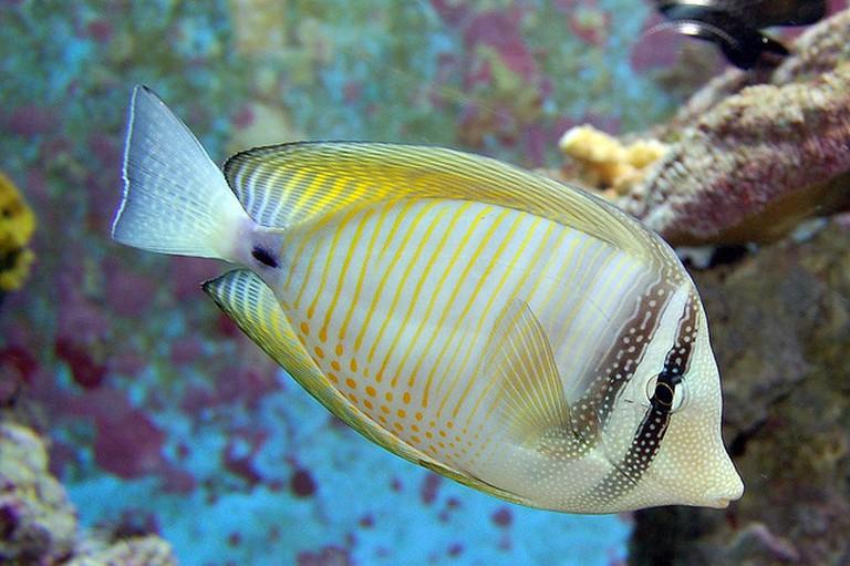 Fish | © Taras Kalapun/Flickr