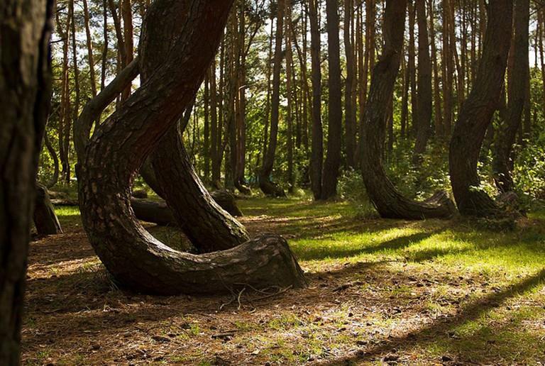Crooked Forest | © Kengi, WikiCommons