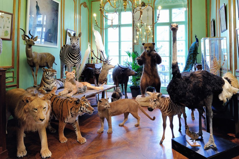 Taxidermist Deyrolle has been in business since 1831