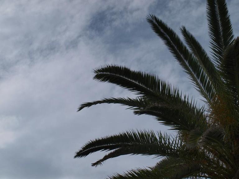 Tenerife   © Ian Palmer/Flickr
