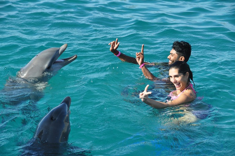 Swim with Dolphins   © vrgoberdhan/Pixabay