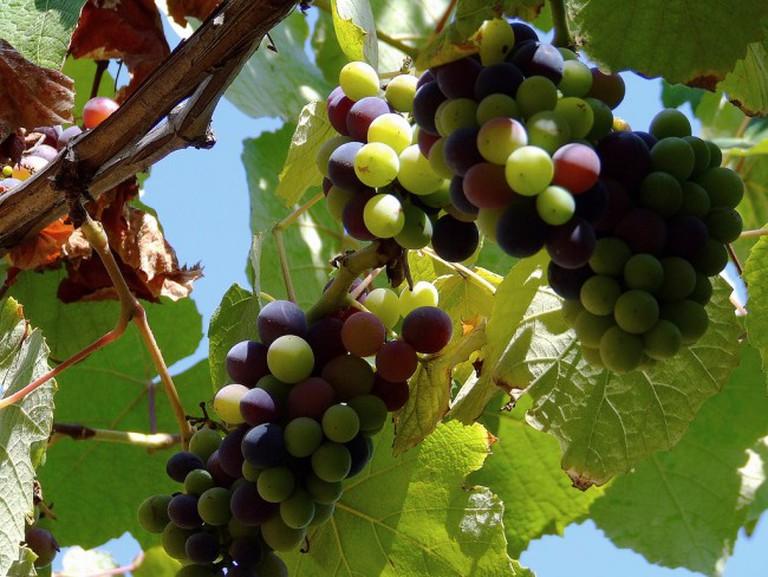 Grape | © Sergio Russo/Flickr