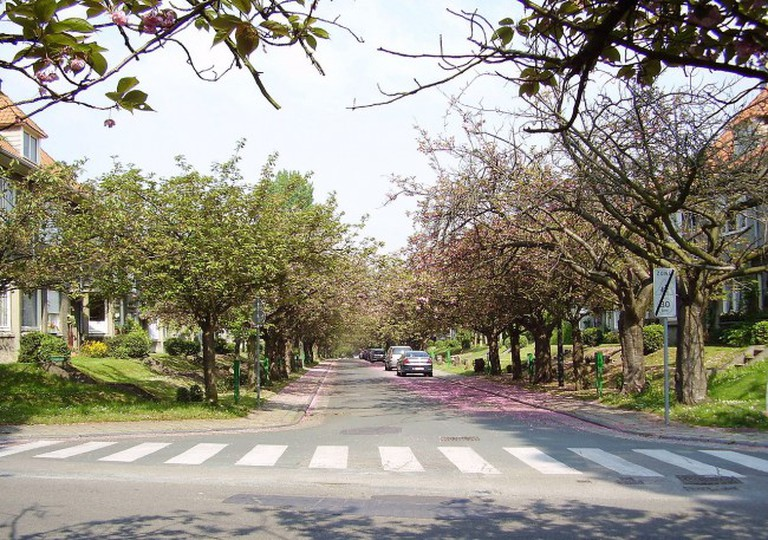 A lane full of cherry trees at the garden cities | © Ben2~commonswiki/WikiCommons