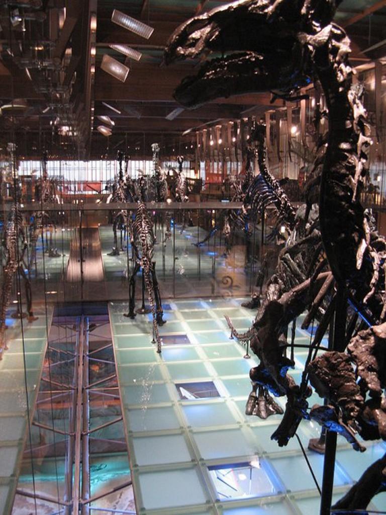 Musée des Sciences naturelles   WikiMedia