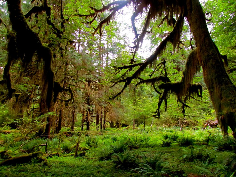 Hoh Rainforest, Olympic National Park, Washington, USA | © Jeff Gunn/Flickr