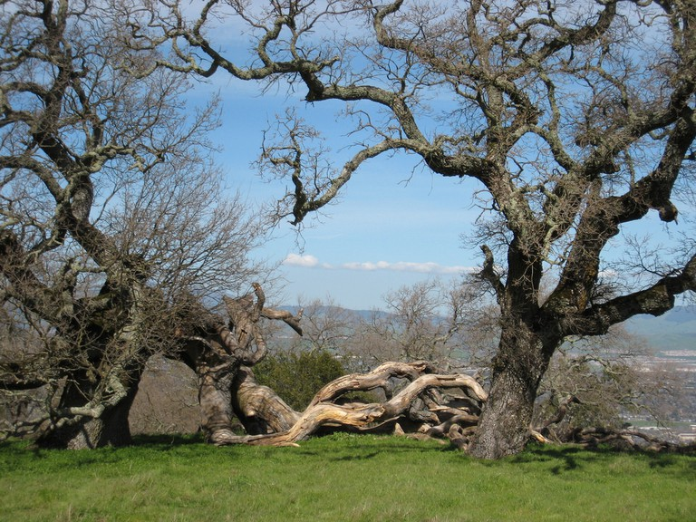 PHOTO 6_TOP 9 THINGS TO DO AND SEE IN PLEASANTON