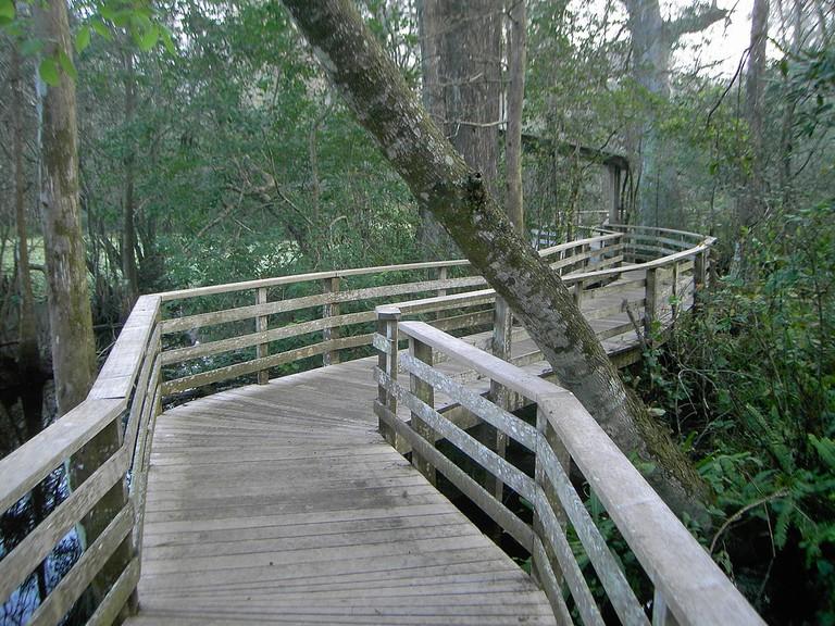 Corkscrew Swamp | © Rubyk/WikiCommons