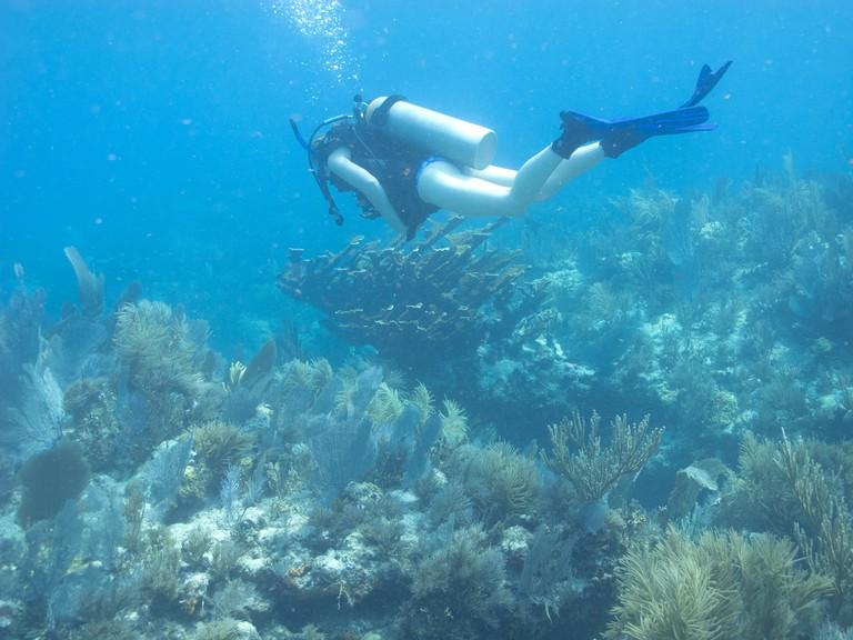 Molasses Reef | © craiggoheen/Flickr