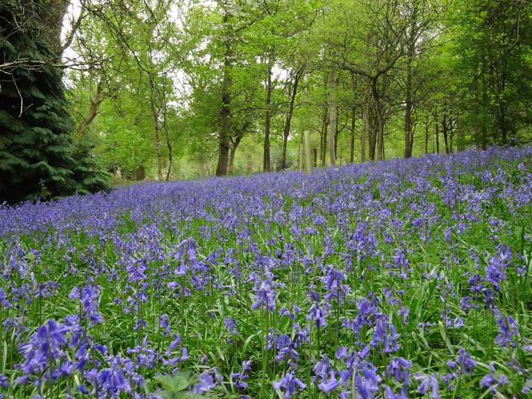The bluebell wood at the Harcourt Arboretum