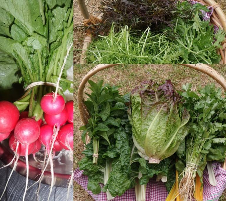 Freshly picked vegetables. © Wombat's Chai