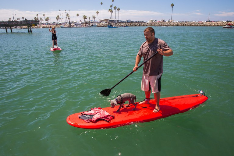 A paddleboarder and his puppy | © john farrell photography/Flickr