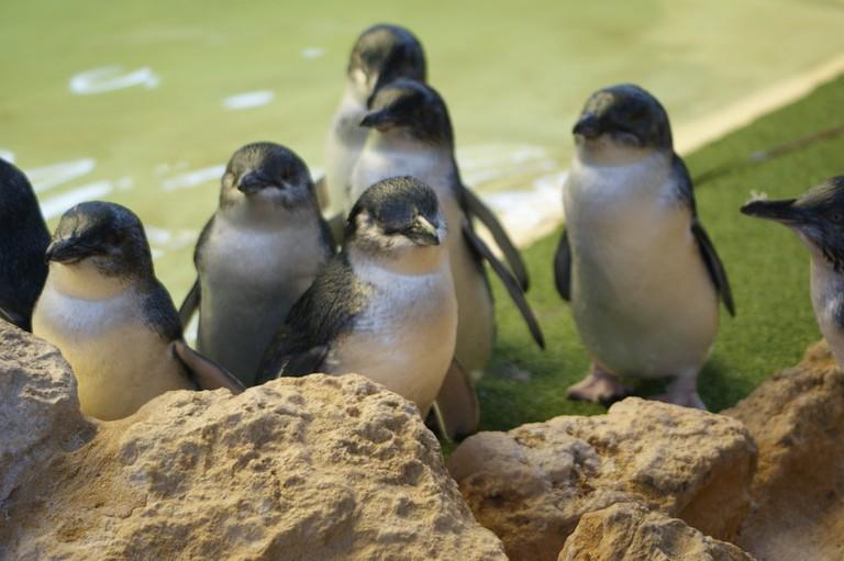 Penguin Island | © Cissi T. / Yelp