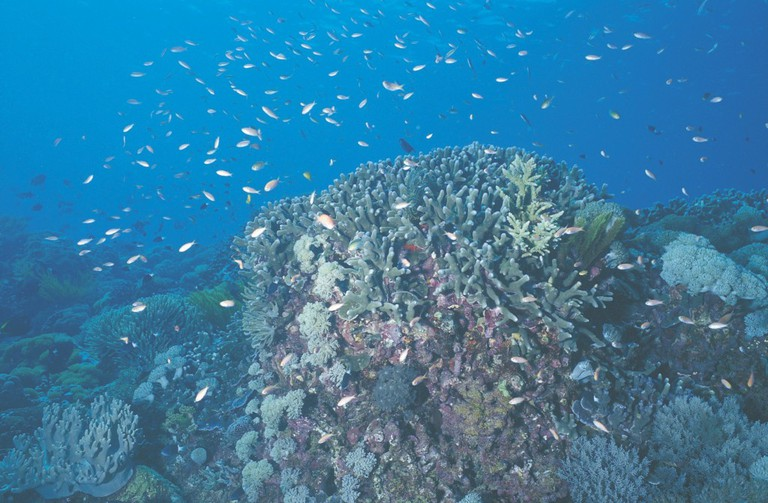 Fairy Bassletts on coral, at Rowley Shoals | Courtesy of Tourism Western Australia