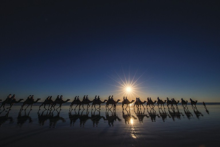 Camels at sunset, Cable Beach   Courtesy of Tourism WA