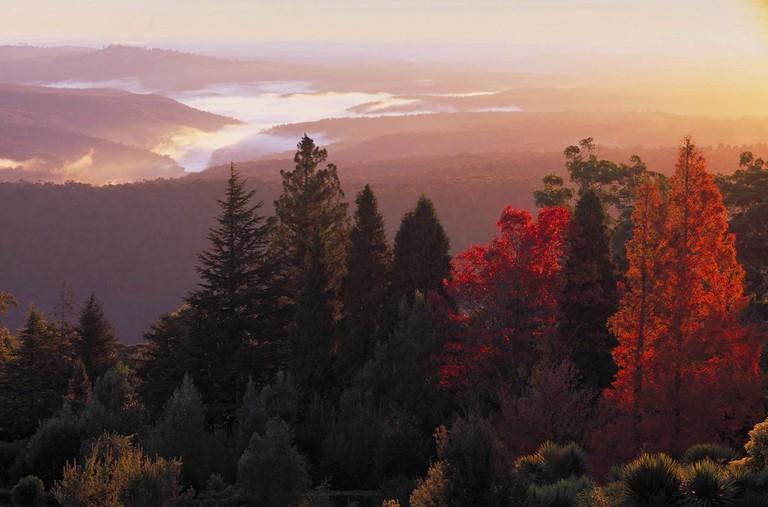 Mount Tomah Botanic Gardens, Blue Mountains | Courtesy of Destination NSW