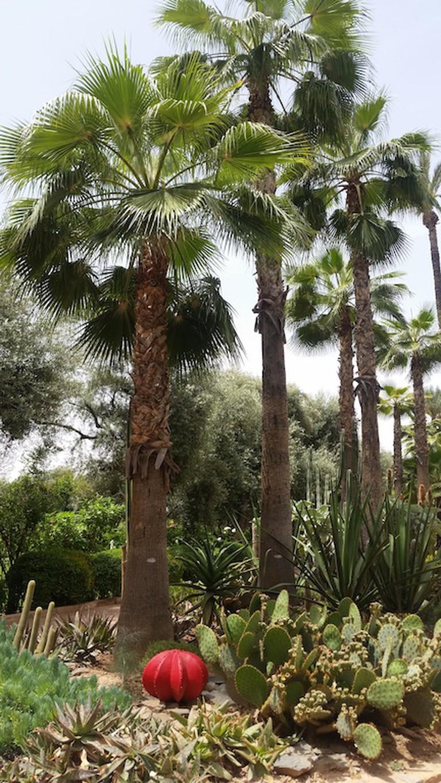 La Mamounia Gardens © Mandy Sinclair