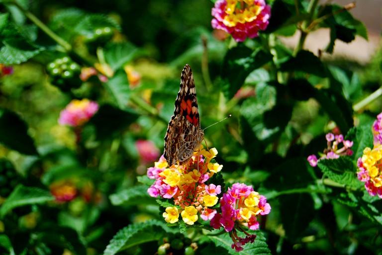 Posing Butterfly | © Kathy Kimpel/Flickr