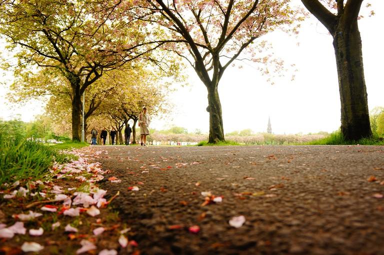 The Meadows   © Alan Swan/Flickr