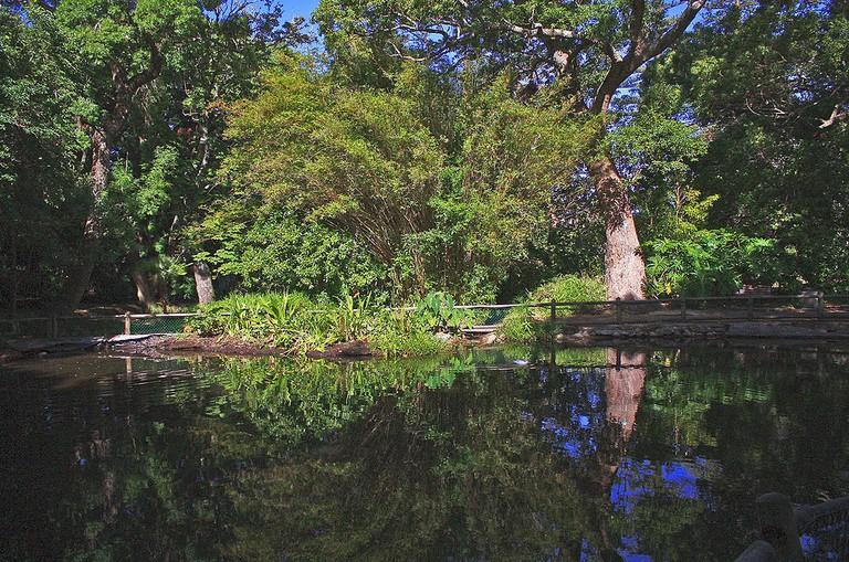 Arderne Gardens © Christopher Murphy/WikiCommons