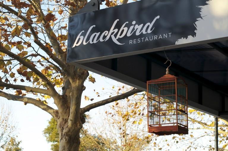 Blackbird Cage