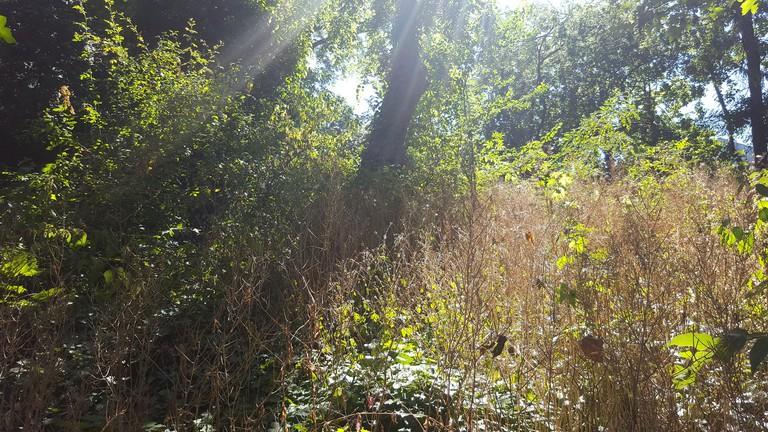 Jardin Sauvage Saint-Vincent
