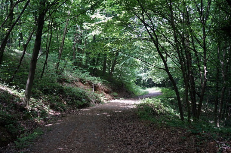 Belgrad Forest/Wikimedia Commons
