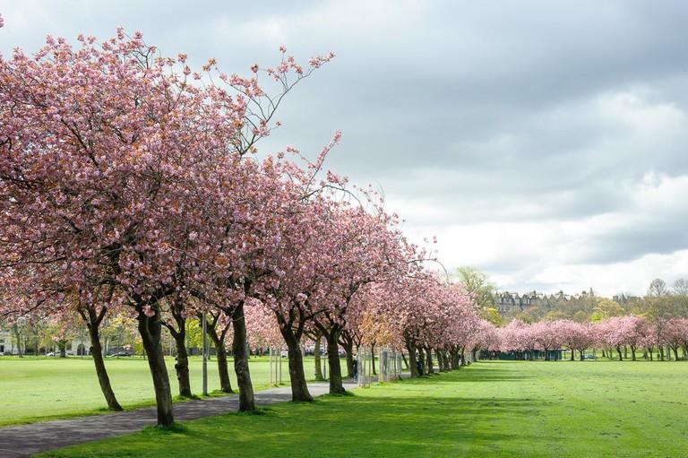 The Meadows | © Michal Ziembicki/Flickr
