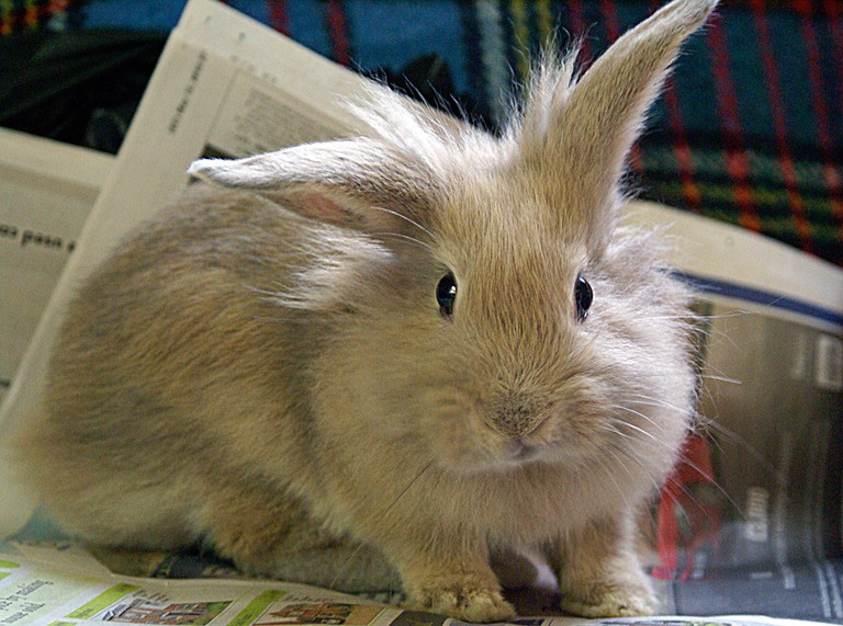 Ms Bunny has lots of rare rabbit breeds